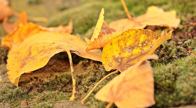 fall-leaves-1789133_1280